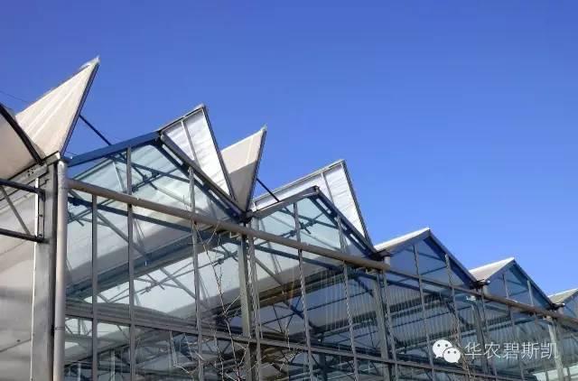 屋面全开型薄膜温室 照片