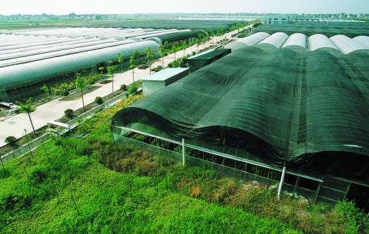大棚和连栋大棚(上海都市绿色) 照片