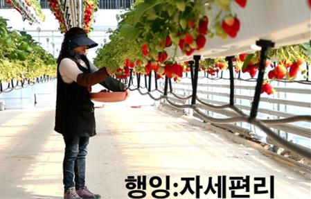 悬挂移动式草莓栽培系统(哈尔滨昊天) 照片