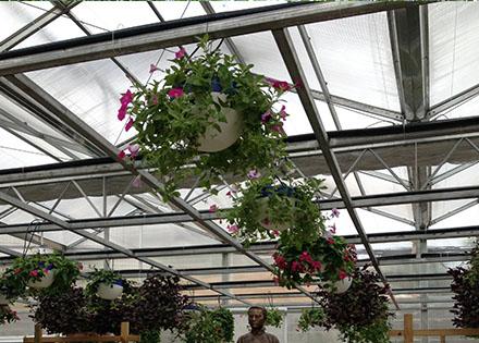 空中容器垂吊栽培(绿东国创) 照片