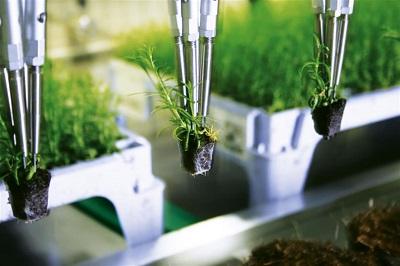 上海侬盛--盘盆移栽系统 照片