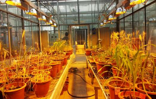 移动式补光系统(北京众博熙泰农业科技有限公司) 照片