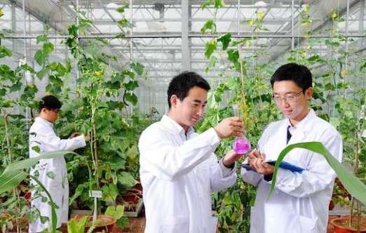 科研温室(河南农园) 照片