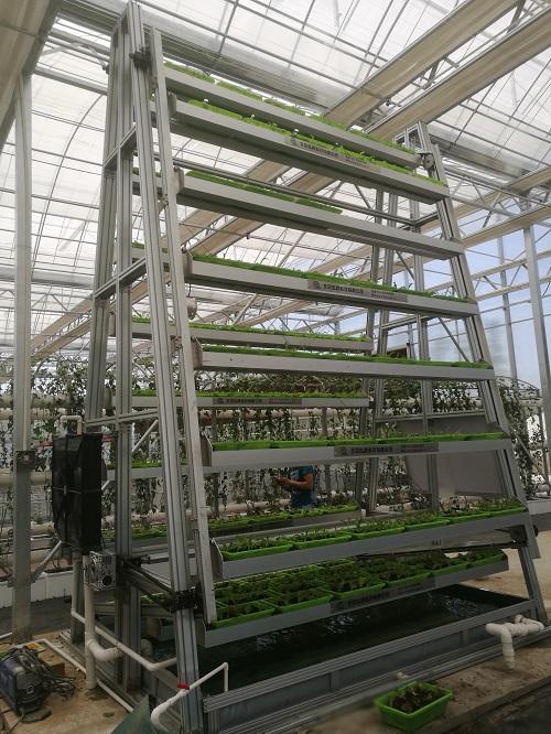泓稷科技-旋转水动力A字型蔬菜种植塔 照片